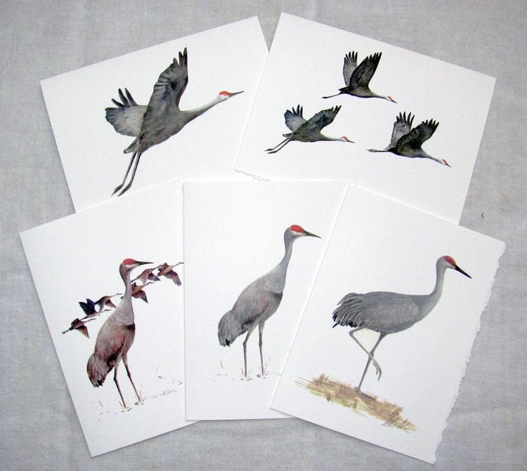 Photo of cards included