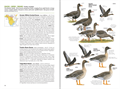 /Portals/0/SmithCart/Images/NatGeoBird_Guide_spread_p14.png